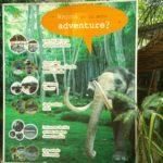 PattayaElephantVillageで象乗り体験をしてみた